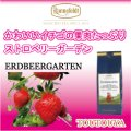ストロベリーガーデン 【ロンネフェルト】 かわいいイチゴの甘酸っぱさが香ります